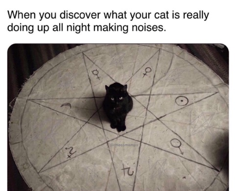 What Your Cat is Really Doing Up All Night